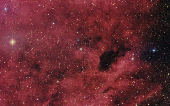 Barnard in red