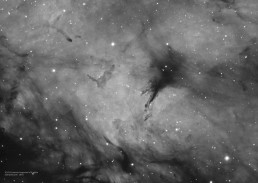 Dark clouds in IC1318