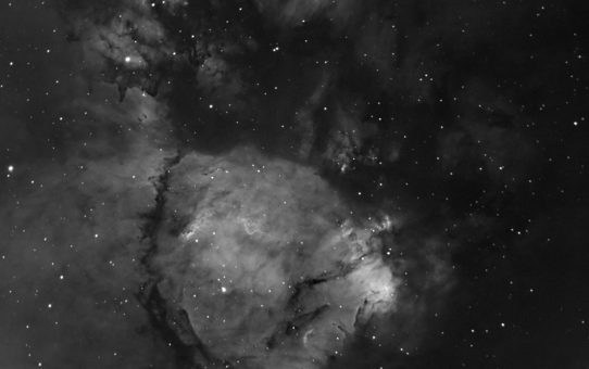IC1795 Fish Head